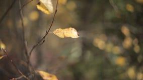 Πτώση του φύλλου απόθεμα βίντεο