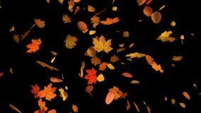 Πτώση φθινοπώρου των φύλλων μικτών διανυσματική απεικόνιση