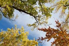 πτώση φθινοπώρου στοκ φωτογραφία με δικαίωμα ελεύθερης χρήσης
