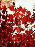 Πτώση, φθινόπωρο στοκ φωτογραφία με δικαίωμα ελεύθερης χρήσης