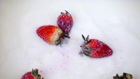 Πτώση φραουλών στο γάλα Σε αργή κίνηση φράουλα απόθεμα βίντεο