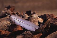 Πτώση φτερών Στοκ φωτογραφίες με δικαίωμα ελεύθερης χρήσης