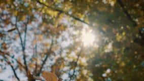 Πτώση φύλλων από ένα δέντρο το φθινόπωρο απόθεμα βίντεο