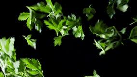 Πτώση φύλλων μαϊντανού κάτω σε ένα μαύρο υπόβαθρο Πλαίσιο Ταλαντεύσεις μαϊντανού στο πλαίσιο Πτώση φύλλων μαϊντανού στην επιφάνει απόθεμα βίντεο