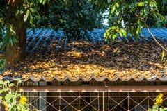 Πτώση φύλλων στη στέγη στο σχολείο στοκ εικόνα με δικαίωμα ελεύθερης χρήσης