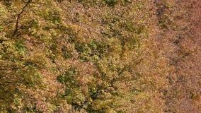 Πτώση φύλλων στο πάρκο πόλεων φθινοπώρου Όμορφη ανασκόπηση απόθεμα βίντεο