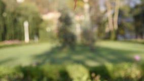 Πτώση φύλλων φθινοπώρου κάτω απόθεμα βίντεο