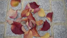 Πτώση φύλλων φθινοπώρου κάτω φιλμ μικρού μήκους