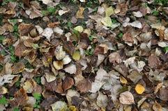 Πτώση φύλλων φθινοπώρου στο έδαφος Στοκ Εικόνες