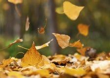 Πτώση φύλλων φθινοπώρου Στοκ φωτογραφία με δικαίωμα ελεύθερης χρήσης