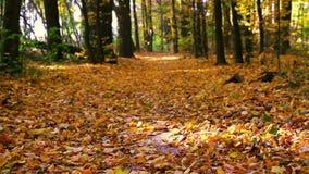 Πτώση φύλλων φθινοπώρου στον ήρεμο καιρό απόθεμα βίντεο