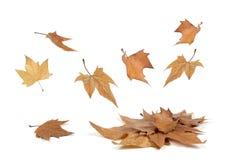 Πτώση φύλλων φθινοπώρου Στοκ Εικόνες