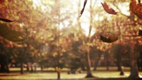 Πτώση φύλλων φθινοπώρου φιλμ μικρού μήκους