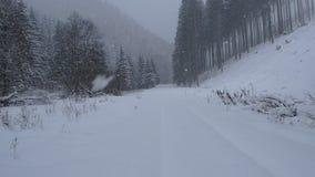 Πτώση χιονιού στο δάσος βουνών απόθεμα βίντεο