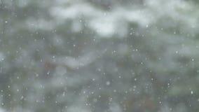 Πτώση χιονιού στο δάσος τοίχων απόθεμα βίντεο