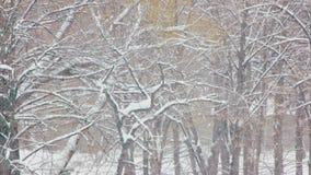 Πτώση χιονιού στο χειμερινό δάσος απόθεμα βίντεο