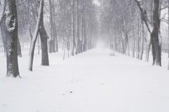 Πτώση χιονιού το πρωί στην πόλης αλέα Στοκ Φωτογραφίες
