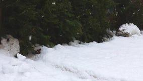 Πτώση χιονιού Χειμερινή χώρα των θαυμάτων χιόνι χιονώδες φύση ξύλων δασικών δέντρων μπλε snowflakes ανασκόπησης άσπρος χειμώνας ρ απόθεμα βίντεο