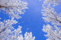 Πτώση χιονιού Στοκ εικόνες με δικαίωμα ελεύθερης χρήσης