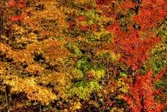 πτώση χρωμάτων Στοκ Εικόνες