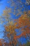 πτώση χρωμάτων Στοκ φωτογραφίες με δικαίωμα ελεύθερης χρήσης
