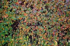 πτώση χρωμάτων Στοκ εικόνα με δικαίωμα ελεύθερης χρήσης