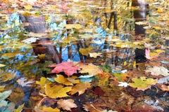 πτώση χρωμάτων Στοκ Φωτογραφίες