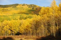 πτώση χρώματος κίτρινη Στοκ Φωτογραφίες