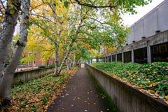Πτώση Foilage στο πανεπιστήμιο του Όρεγκον Στοκ Εικόνα