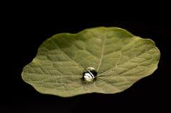 Πτώση nasturtium στο πέταλο Στοκ Φωτογραφίες