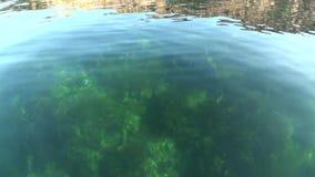 Πυθμένας της θάλασσας στην καθαρή σαφή επιφάνεια νερού του αρκτικού ωκεανού στη νέα γη απόθεμα βίντεο
