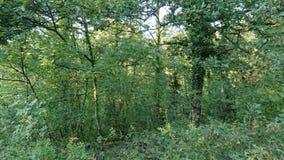 Πυκνά δάσος και Vegitation στοκ εικόνα