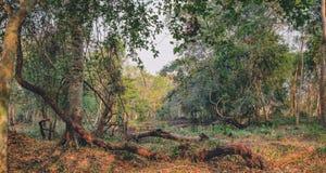 Πυκνή ζούγκλα κοντά στο ναό Beng Melea, Καμπότζη Στοκ εικόνα με δικαίωμα ελεύθερης χρήσης