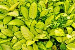 Πυκνή πράσινη τροπική βλάστηση. Στοκ Φωτογραφίες