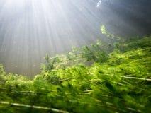 Πυκνή υποβρύχια βλάστηση watermilfoil με τα sunrays Στοκ φωτογραφία με δικαίωμα ελεύθερης χρήσης