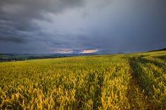 Πυκνοί σύννεφα και τομέας σιταριού Στοκ Εικόνες