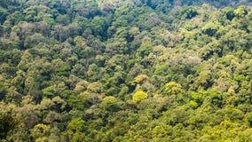 πυκνός δασικός πράσινος Στοκ φωτογραφία με δικαίωμα ελεύθερης χρήσης