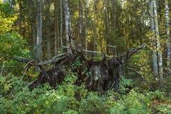 Πυκνό δάσος, φύση στο χωριό στοκ φωτογραφία με δικαίωμα ελεύθερης χρήσης