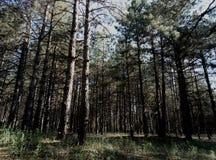 πυκνό δάσος στοκ εικόνα με δικαίωμα ελεύθερης χρήσης