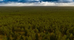 πυκνό πράσινο δάσος στο επίπεδο τοπίο της βόρειας Γερμανίας, που τρυπά και μονότονο στοκ εικόνες