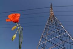 πυλώνας παπαρουνών στοκ φωτογραφίες με δικαίωμα ελεύθερης χρήσης