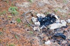 Πυρά προσκόπων που σκορπίζεται με τις πέτρες σε ένα δάσος πεύκων Στοκ Φωτογραφίες