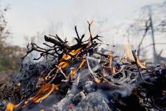 Πυρά προσκόπων στη φύση Στοκ εικόνες με δικαίωμα ελεύθερης χρήσης