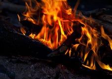 Πυρά προσκόπων στο δάσος τη νύχτα Στοκ εικόνες με δικαίωμα ελεύθερης χρήσης