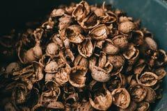 Πυρήνας ξύλων καρυδιάς αποφλοίωσης υποβάθρου κοχυλιών ξύλων καρυδιάς στοκ φωτογραφία
