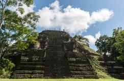 Πυραμίδα και ο ναός στο πάρκο Tikal Αντικείμενο επίσκεψης στη Γουατεμάλα με τους των Μάγια ναούς και τις εθιμοτυπικές καταστροφές στοκ εικόνα