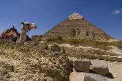 πυραμίδα καμηλών Στοκ εικόνα με δικαίωμα ελεύθερης χρήσης