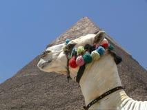 πυραμίδα καμηλών Στοκ φωτογραφία με δικαίωμα ελεύθερης χρήσης