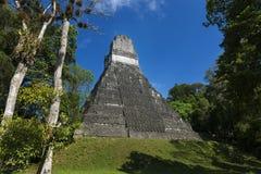 Πυραμίδα στην αρχαία πόλη της Maya Tikal στη Γουατεμάλα Στοκ Εικόνες