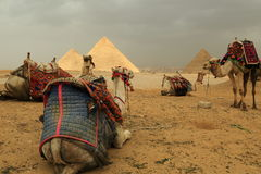 Πυραμίδες και καμήλες Στοκ Εικόνες